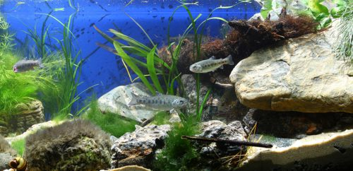 Biotope-aquarium_2012_1_final