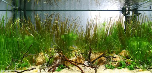 Biotope-aquarium_2012_2_final