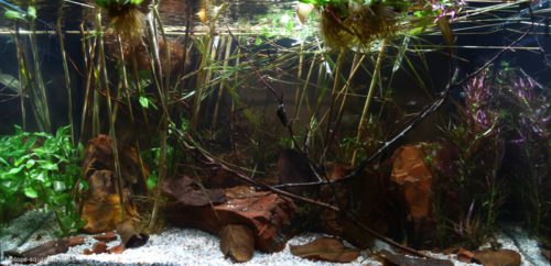 Biotope-aquarium_2012_4_final