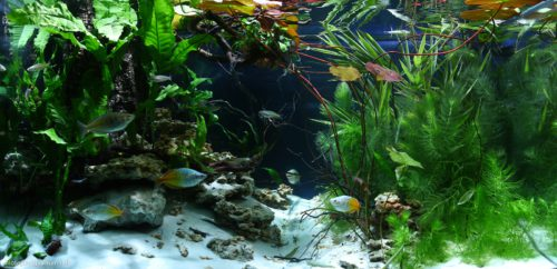 Biotope-aquarium_2012_5_final