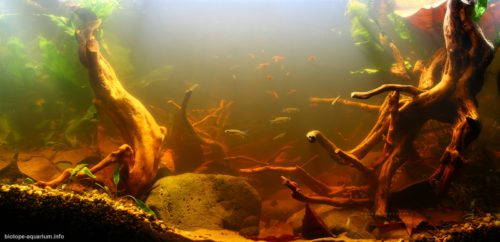 Biotope-aquarium_2012_9_final