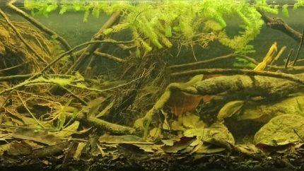 Orilla de un arroyo, afluente del río Tenixtepec, Papantla, México (1)