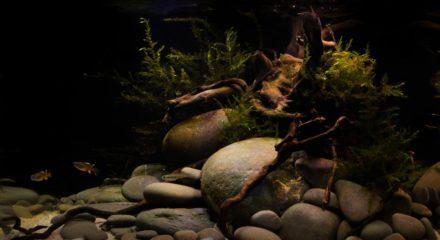 shallow_waters_of_herbert_river_in_queensland_australia_1