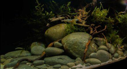 shallow_waters_of_herbert_river_in_queensland_australia_2