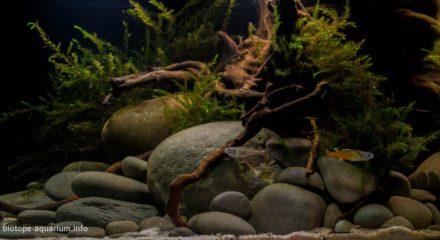 shallow_waters_of_herbert_river_in_queensland_australia_3