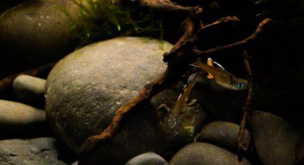 shallow_waters_of_herbert_river_in_queensland_australia_6