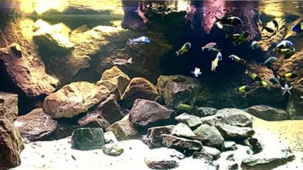 Where_the_sand_meets_the_rocks_in_lake_Tanganykia_1