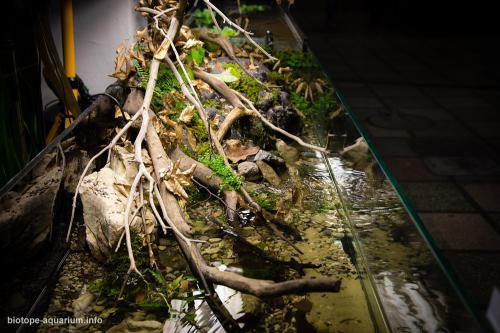 001_2013_biotope_aquarium_e_1_2