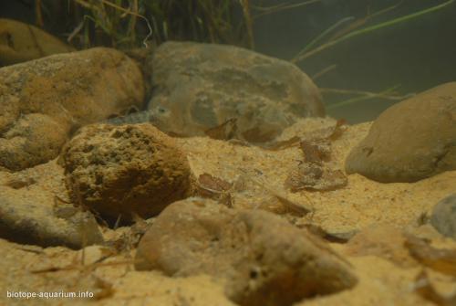 003_biotope-aquarium_ao-2-3