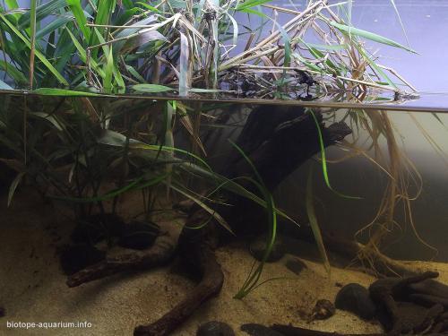 008_biotope-aquarium_ao-6-2