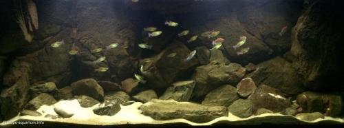 011_biotope-aquarium_a-10-1