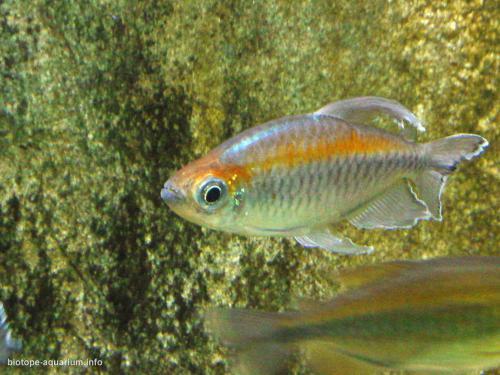 011_biotope-aquarium_a-10-3