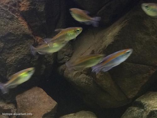 011_biotope-aquarium_a-10-4
