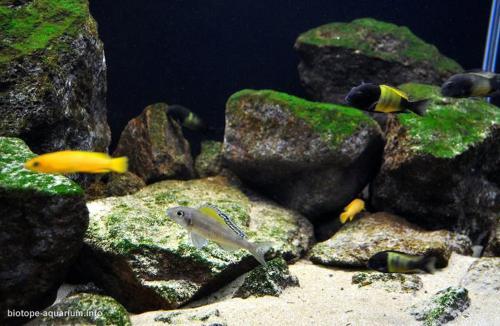 011_biotope-aquarium_a-18-3
