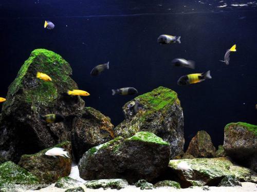 011_biotope-aquarium_a-18-4