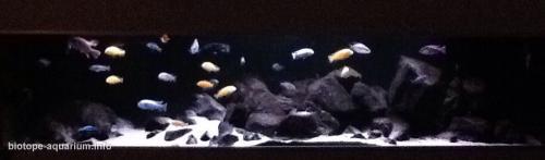 015_biotope-aquarium_a-5-2