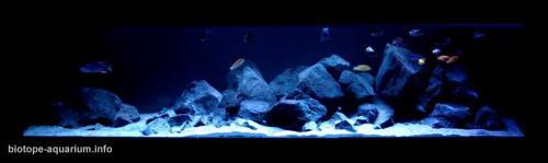 015_biotope-aquarium_a-5-4
