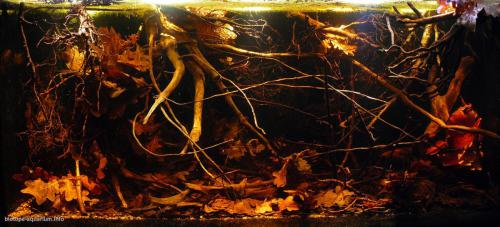 017_biotope-aquarium_sa-14-1