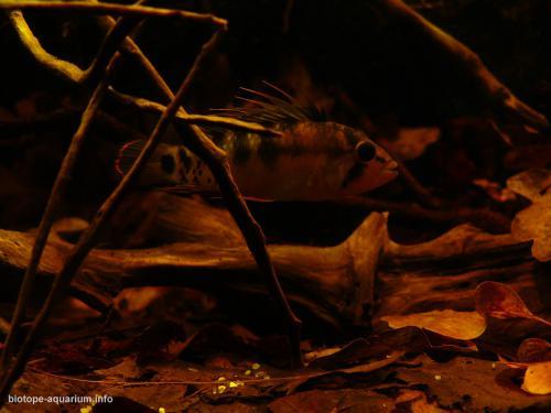 017_biotope-aquarium_sa-14-4