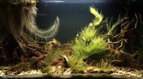 018_biotope-aquarium_sa-12-1