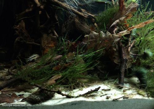018_biotope-aquarium_sa-12-2