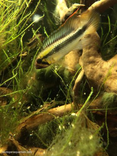 018_biotope-aquarium_sa-12-3