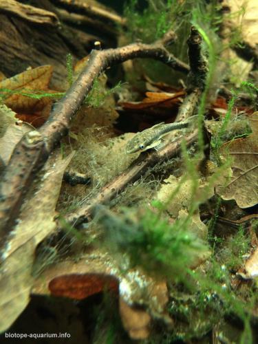 018_biotope-aquarium_sa-12-4