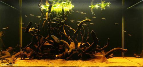 019_biotope-aquarium_sa-13-1