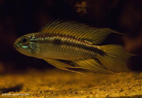 019_biotope-aquarium_sa-13-2