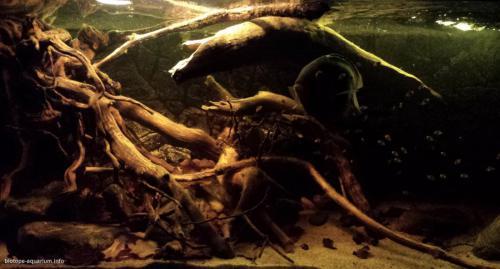 022_biotope-aquarium_sa-9-1