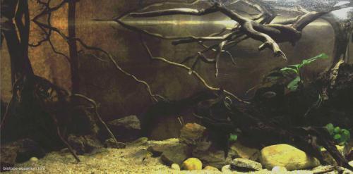 025_biotope-aquarium_a-12-1