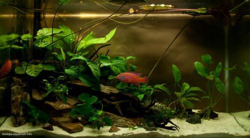 026_biotope-aquarium_a-4-1