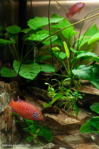 026_biotope-aquarium_a-4-3