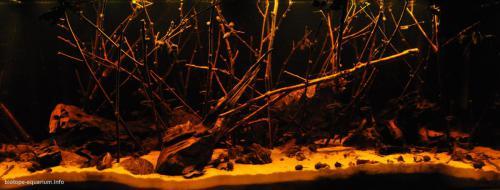 026_biotope-aquarium_sa-7-1