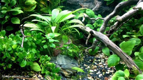 031_biotope-aquarium_a-15-4