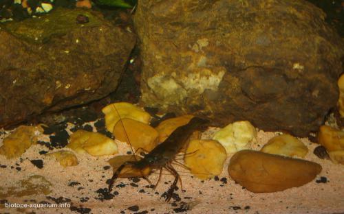 032_biotope-aquarium_e-13-2