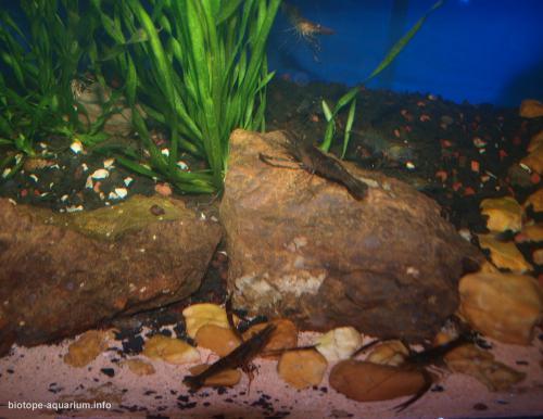 032_biotope-aquarium_e-13-3