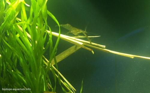 032_biotope-aquarium_e-13-4