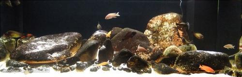 035_biotope-aquarium_a-13-2