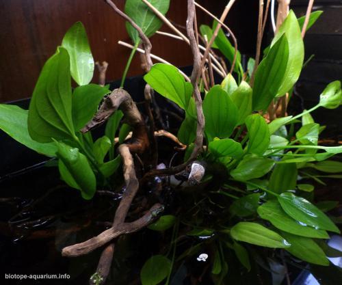 039_biotope-aquarium_sa-11-2
