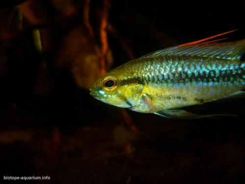 039_biotope-aquarium_sa-11-4
