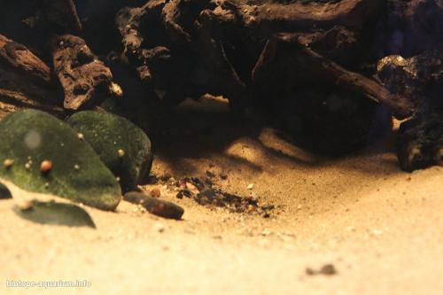 040_biotope-aquarium_sa-1-2