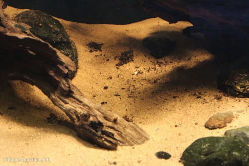040_biotope-aquarium_sa-1-4