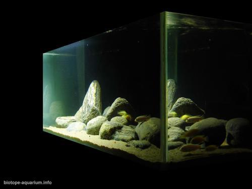 043_biotope-aquarium_a-7-2