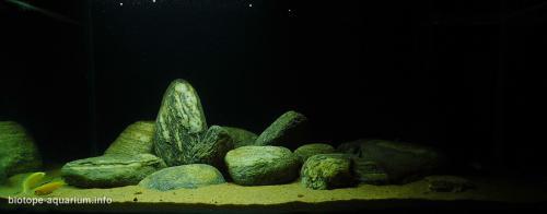 043_biotope-aquarium_a-7-4