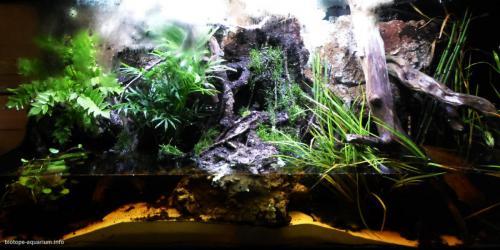044_biotope-aquarium_e-5-1