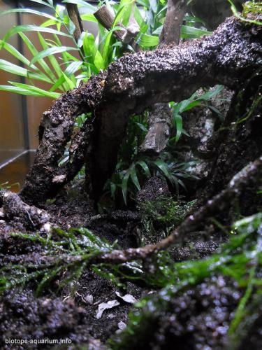044_biotope-aquarium_e-5-2