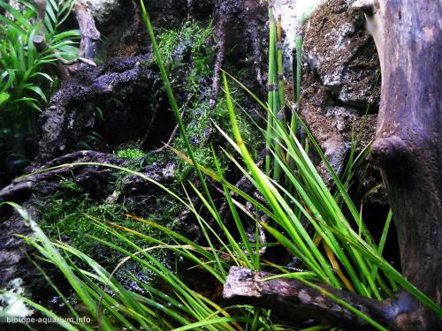 044_biotope-aquarium_e-5-3