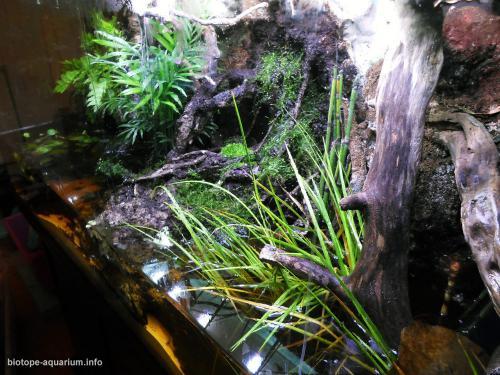 044_biotope-aquarium_e-5-4