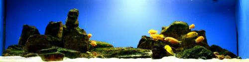 047_biotope-aquarium_a-14-1